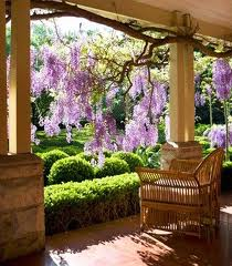Porch wisteria